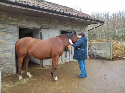 Equine Therapy FLute Music Paintedhorse Livvy Adams Capture the Moment, BE Potter