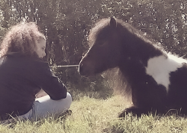 aniety low moods equine therapy EFL LEAP counselling paintedhorse glastonbury