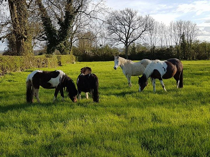 Paintedhorse equine therapy learning somerset