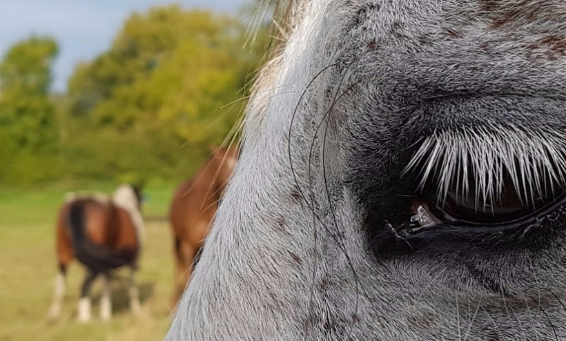Counselling, Business Support, Somerset, EFL, Training. Equine Therapy, ReWilding