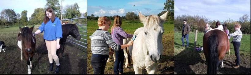 Meet the herd, Paintedhorse, Equine Therapy, counselling, Somerset