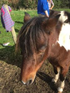 The Healing Herd, Paintedhorse, Meet the herd, Glastonbury, Equine Therapy