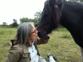 Equine ReWilding, Paintedhorse, EFL, EAL, EFP, Equine Therapy, Healing Herd