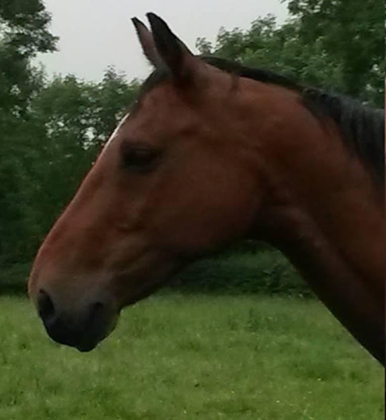 Danny, Equine ReWilding, Paintedhorse, EFL, EAL, EFP, Equine Therapy, Healing Herd