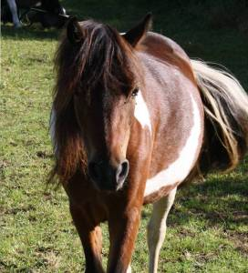 Animal Communication, Equine ReWilding, Paintedhorse, EFL, EAL, EFP, Equine Therapy, Healing Herd