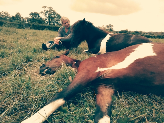 Glastonbury, Mandala, Equine ReWilding, Paintedhorse, EFL, EAL, EFP, Equine Therapy, Healing Herd