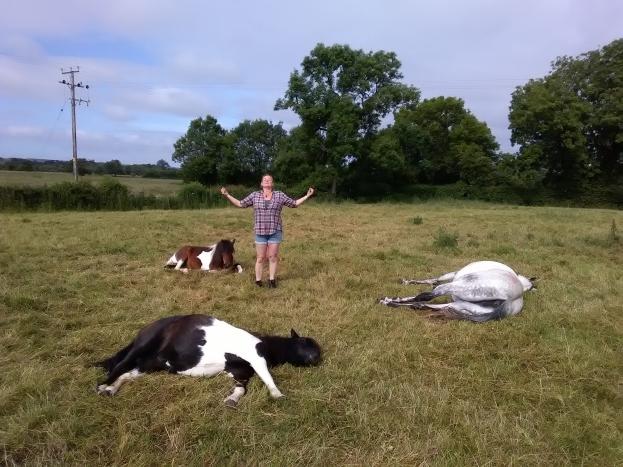 Sharing Territory, Equine ReWilding, Paintedhorse, EFL, EAL, EFP, Equine Therapy, Healing Herd