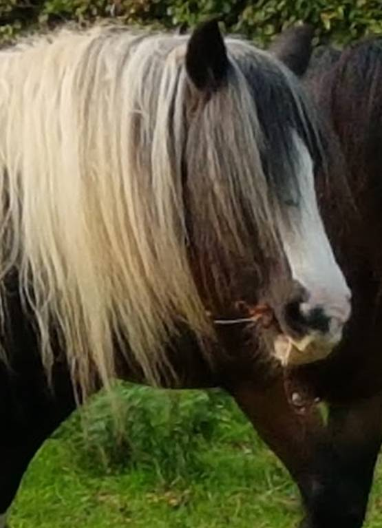 Equine Counselling, ReWilding, Paintedhorse, Somerset