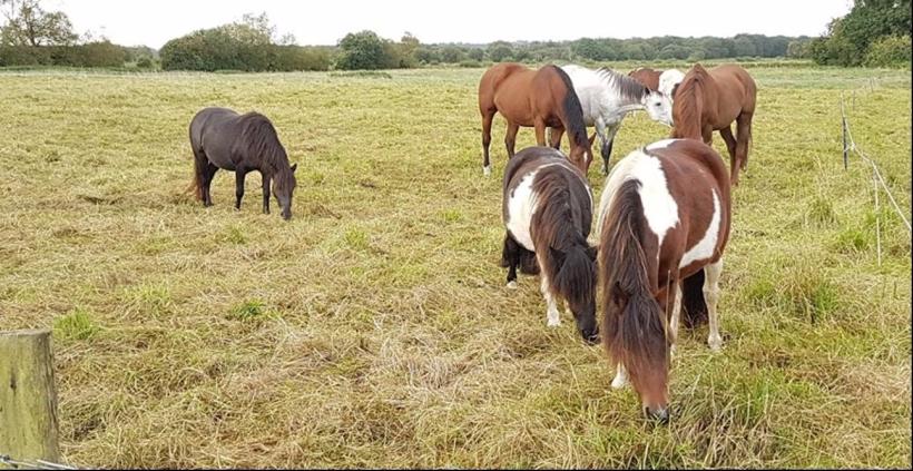 Fundraising, Paintedhorse, Equine ReWilding, Glastonbury, Business Sponsorship