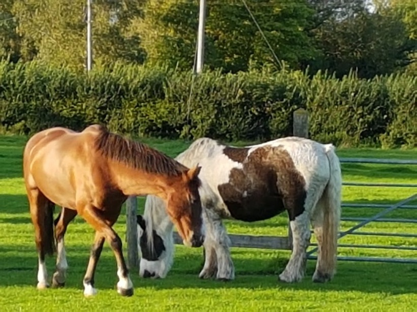 Equine Therapy, EFL, ReWilding, Counselling, Paintedhorse, Somerset