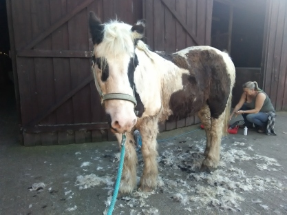 Cushings, PPID, Paintedhorse, Equine Therapy, Healing