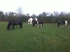 5 Logan has Dartmoor visitors