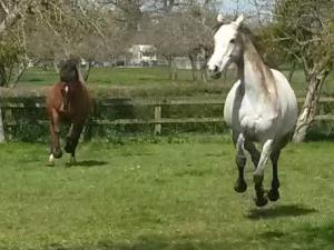 EFL, EFP, Equine Therapy, LEAP, ReWilding, Somerset, Paintedhorse