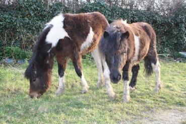 Paintedhorse, Dartmoor Hills, Equine Therapy, Somerset, EFL, EFP, LEAP, ReWilding