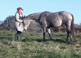 Equine ReWilding, Somerset, EFL, EFP, Counselling