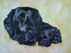 Clayton's Labradors