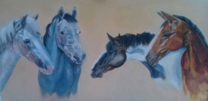Gabbi's horses