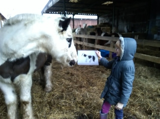 Equine Therapy, EFL, EFP, Counselling, ReWilding, LEAP, Glasto